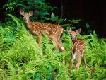 Hur görs djur i SVT:s naturprogram?