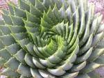 En sådan här trevlig växt hade de på Bergianska