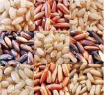 Ris påverkar generna