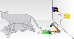 Det framgår inte i fysiklitteraturen vilket kön den kända Schrödingers katt hade - detta kan bli ett forskningsområde för genusvetarna