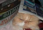 Ibland orkar jag inte läsa Metro, men katterna tröttnar aldrig på pappersprasslet